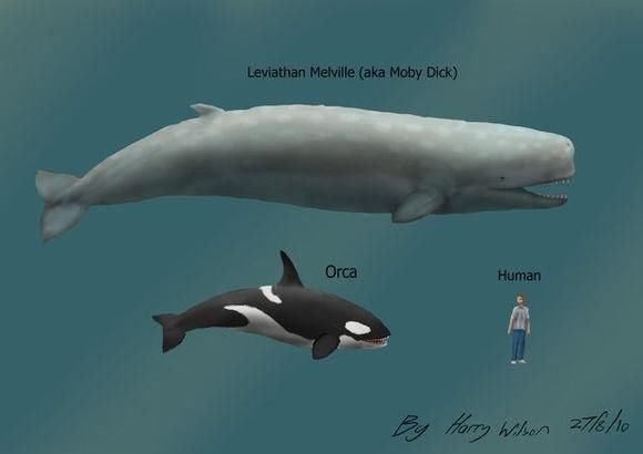 虎鲸和抹香鲸到底谁才是齿鲸中最强大的存在