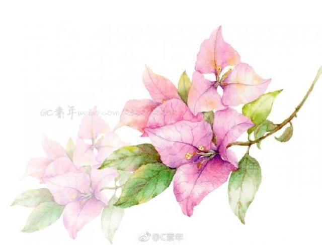 三角梅水彩画图片步骤