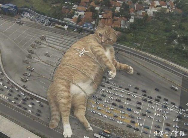 这里有个巨猫国,胆小如鼠,喵表情包了解一下?嗨呀,好气啊!