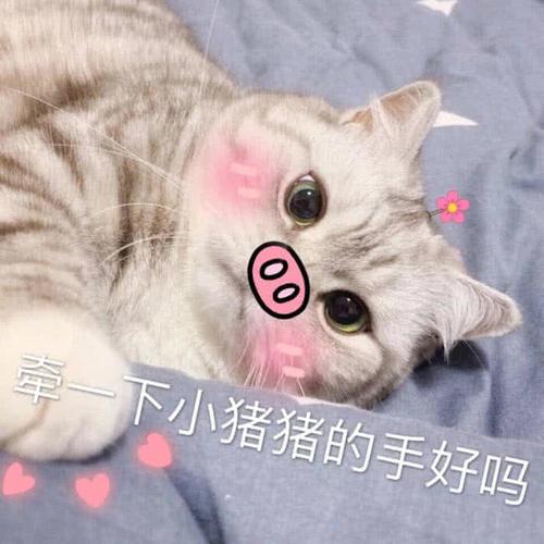 超奈斯绿色小奶猫表情火了:你送我的帽子,搞表包笑爱大情全可图片