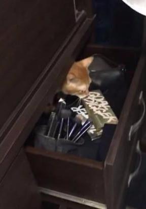 家里柜子自己会动,女主人吓到瑟瑟发抖,打开后看到一个橘色猫头