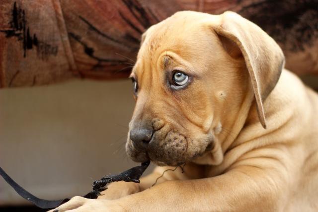 狗狗呕吐,问题可轻可重,主人需要了解以下几个方面