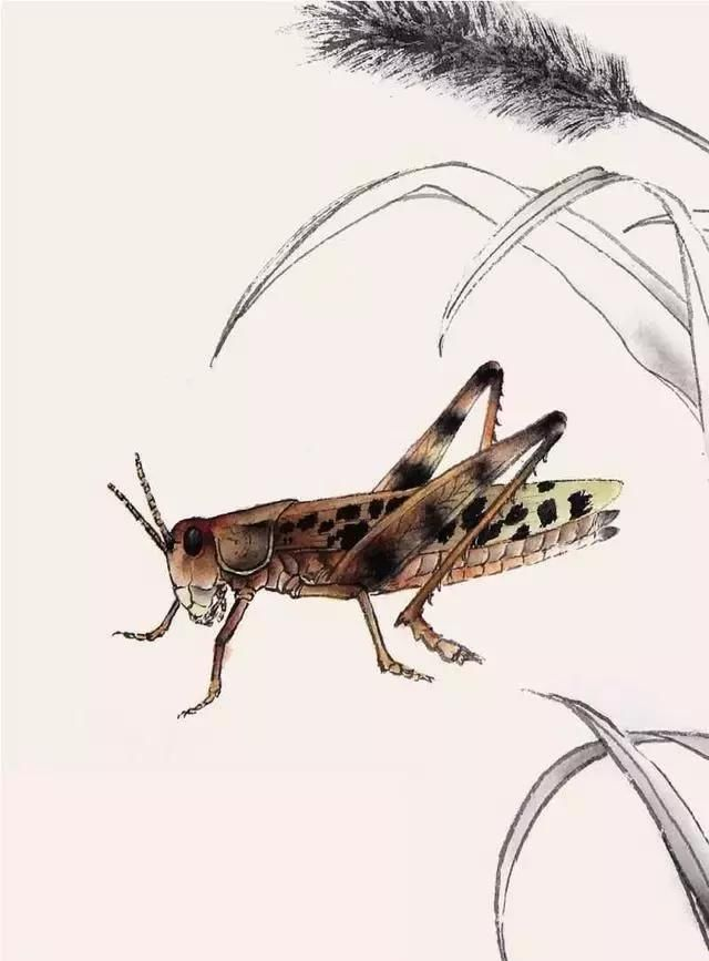 蝗虫工笔画的画法步骤图