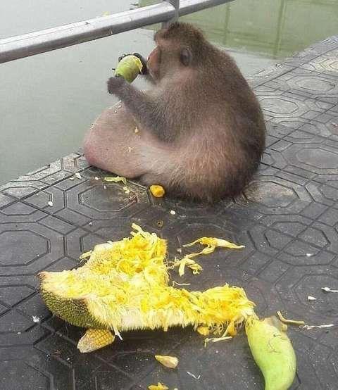 游客胡乱导致投食泰国一猴子a游客,被泰国野生v游客计划作文1000个字图片