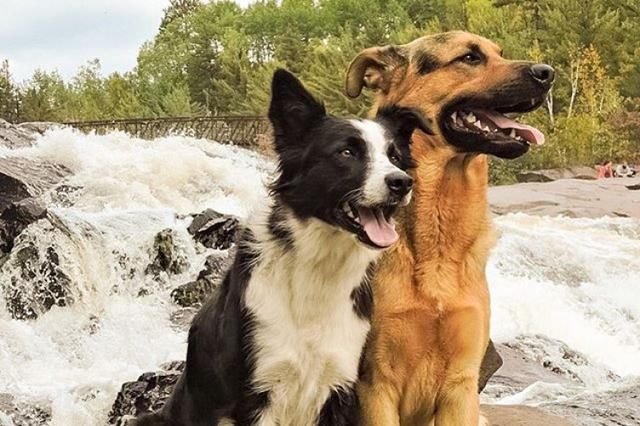 养两只狗狗,可能会面临许多冲突,主人要先明白这5点才能避免