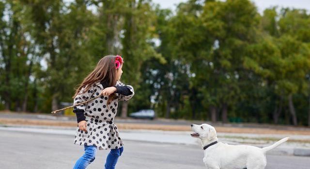 跟狗狗玩耍的5个禁忌,劝你不要犯!