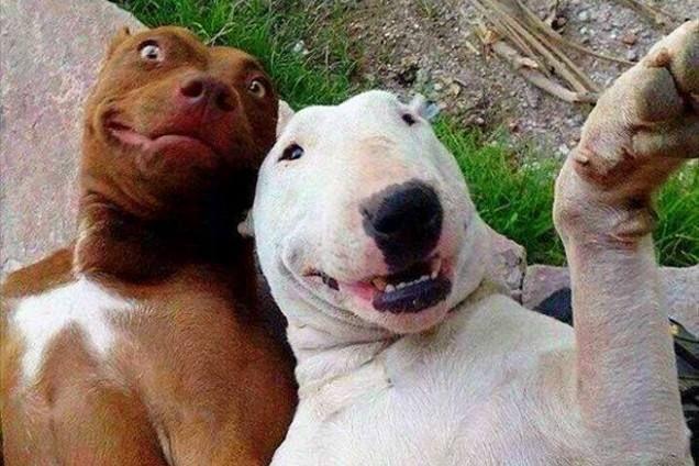 史上最搞笑的动物,最后一张笑死了!吃饭的时候别看