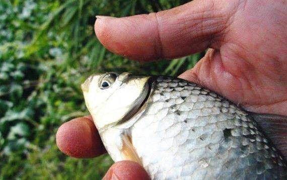 技巧掌握之逗钓视频,钓鱼着四个逗钓传统你也xv技巧巴鲁斯图片