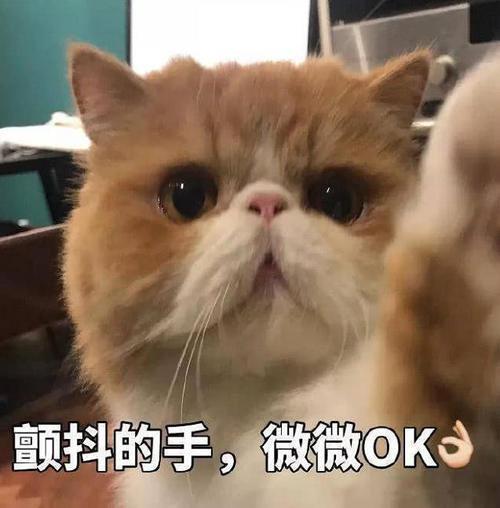 超萌表情天涯:生气了,开始哄吧刀凌云明月表情猫咪包图片