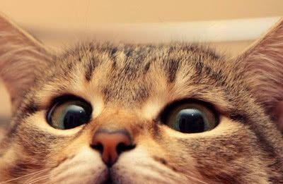 为何大家都爱养猫?看到这一幕,我理解养猫千日,用在一时的意思