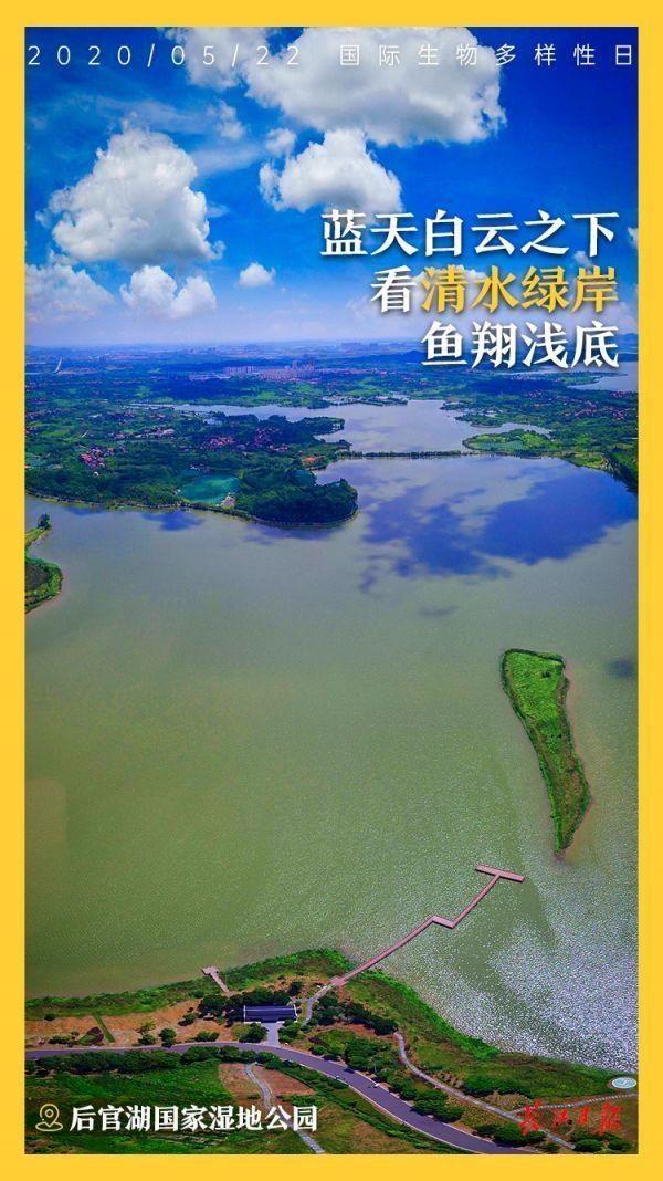 海报图集|武汉·湿地之城湿地武汉