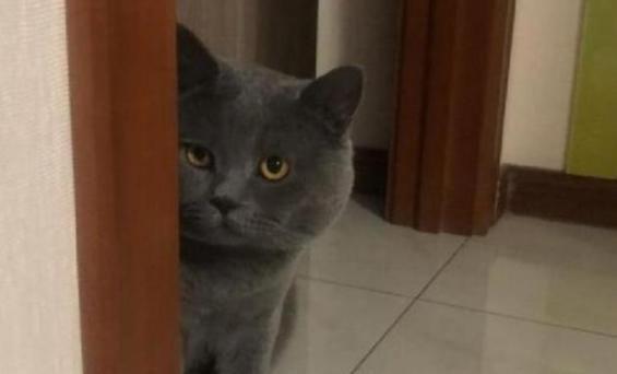 表情当着蓝猫面,假装偷吃猫表情,蓝猫秒变图片手绘生气主人包罐头