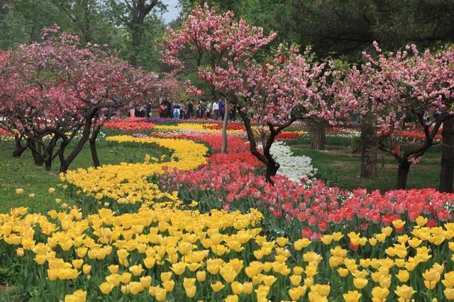 春天来了,拿好这份北京赏花指南!