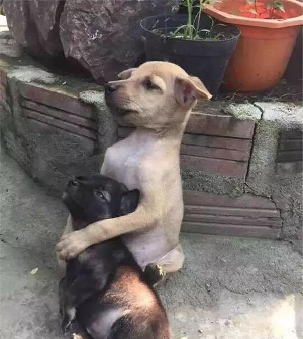 两只流浪狗遭虐待被尼姑收留,狗狗每天和尼姑打坐!