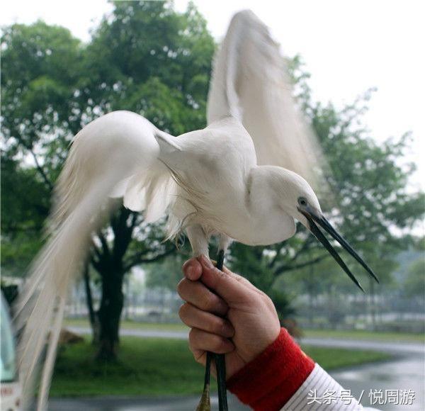 有些常见的小动物是受法律保护,登广东金子山玩小动物