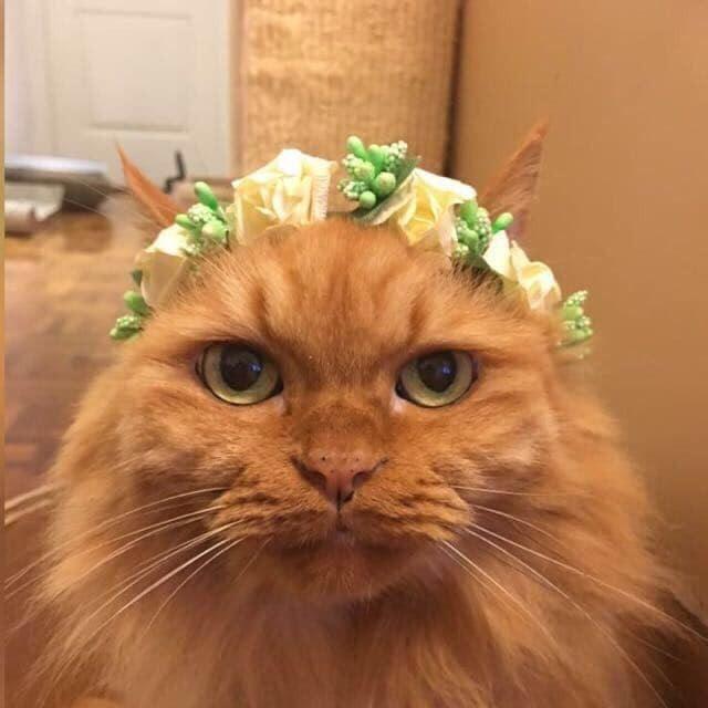 猫咪因肾病离世,留下一千多根针头,记录主人和猫对抗肾病的日子