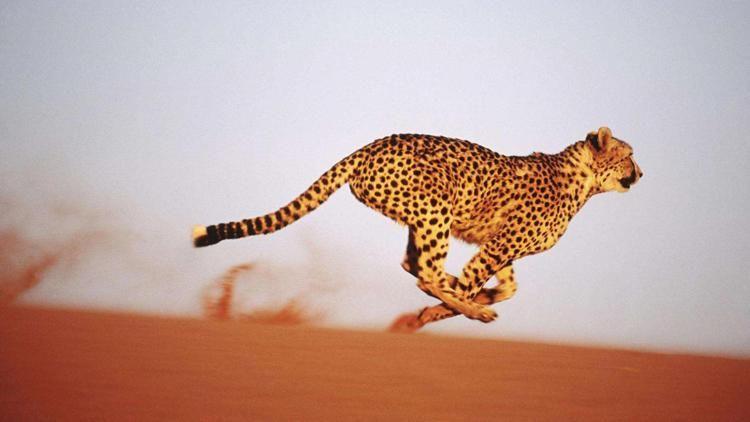 把镜头从动物世界拉回到汽车世界,还有一头猎豹在中国的南方偏安一隅