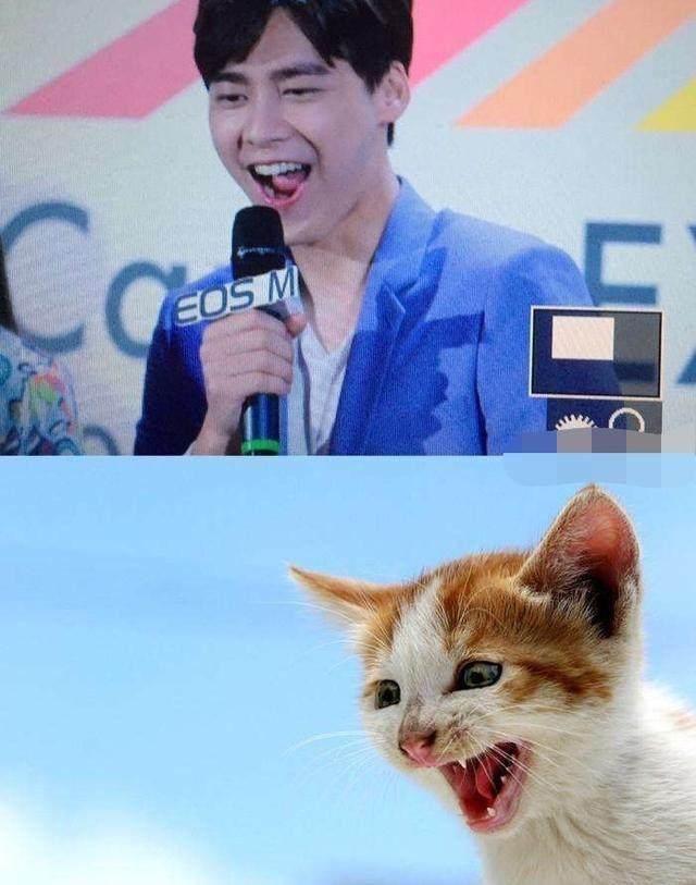 明星与动物爆笑撞脸,李易峰和猫神同步,赵丽颖,王源萌化了!