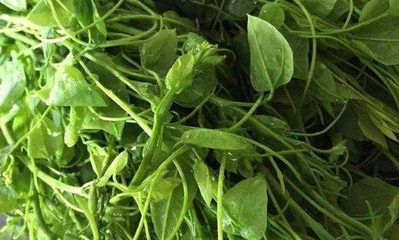 农村一种野菜,市场上每斤15元供不应求,为什么农民不多种点呢?叔叔茄子