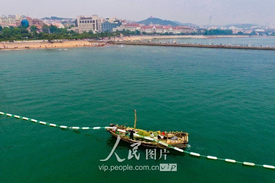 山东青岛:防绿潮减灾害 栈桥景区增加铺设拦截网