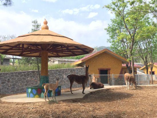 石家庄动物园新建美洲动物区 大小羊驼搬新家