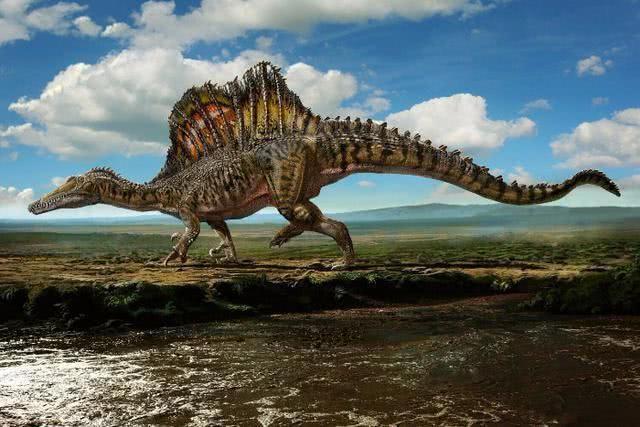 4,棘龙:目前已知最大的食肉恐龙,体长12到20米,生存于白垩纪中期的