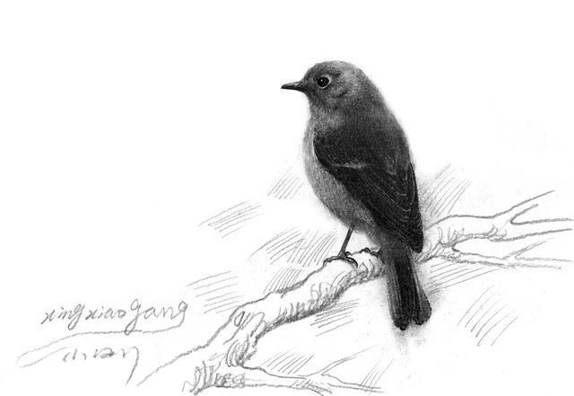 黑白灰的力量小刚画的素描鸟儿