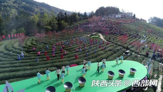 """紫阳23万亩富硒茶园陆续开园 游客边采茶边体验""""紫阳民歌"""""""