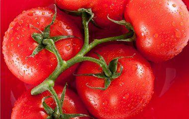 当心3个吃西红柿的错误方法千万不要再这样吃了!