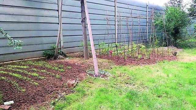 庭院花园菜地设计