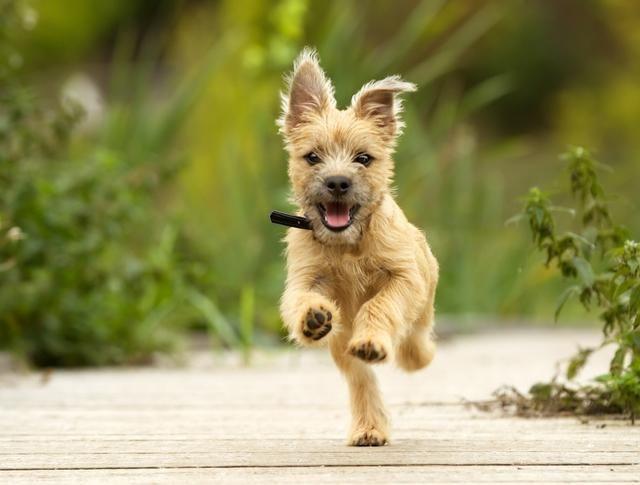 累了的狗才是好狗,日常遛狗好处多,无形中让主人更健康
