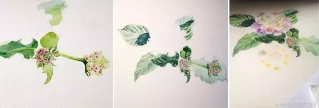 水彩画入门教程:画花卉的步骤