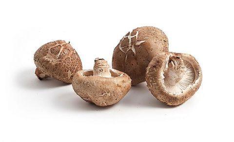 正确吃香菇可抗癌反之就会使癌细胞滋生