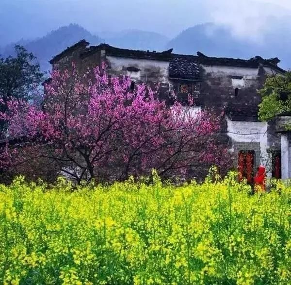 春季的江西婺源江岭风景是中国最美!