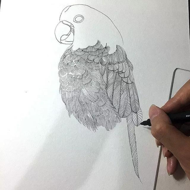 手绘一根羽毛图片