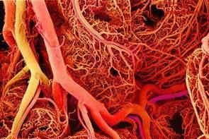 辟谣:经常吃黑木耳、洋葱,就可以清理血管垃圾?今天才知道真相