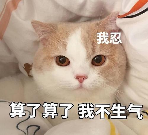 傲娇表情不好:生气了,哄表情的那种怎样qq把经典包猫咪图片