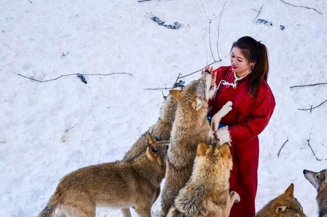 野三坡 这个冬天有狼出没 还有美女与狼共舞