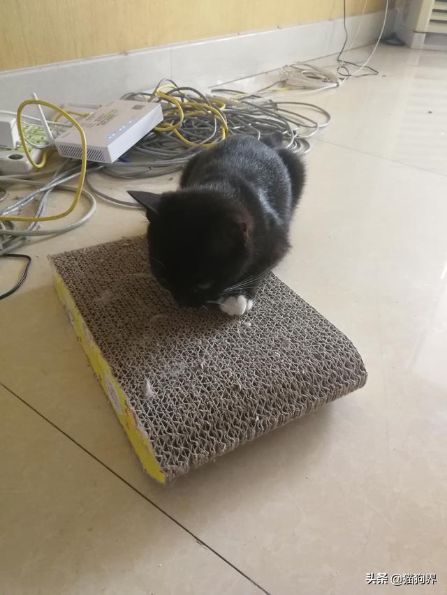 如何解决猫主子的磨爪问题?这几点要注意