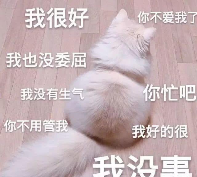 肥宅猫:我很好,我也没有生气!总之你不爱我了,nba2kol搞笑的魔术师图图片