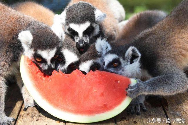 """深圳野生动物园的小动物们,都开始""""各出奇招""""降温避暑啦,看这些小动物"""