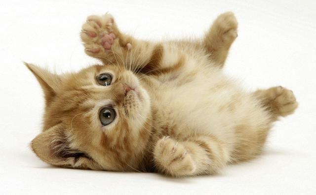 可爱的萌宠调皮小猫咪的的回忆.