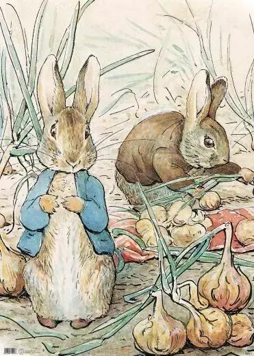 兔子喜动物王国