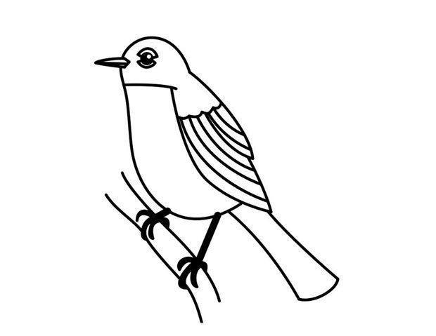 如何画小鸟小鸟的简笔画步骤图 罗宾鸟 小鸟简笔画 61幼儿网