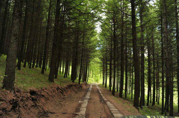 翠云山森林风景区开山迎客,邀你到大森林踏青