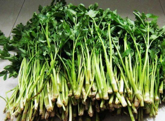 又健康又美味这些山野菜让你赞不绝口!
