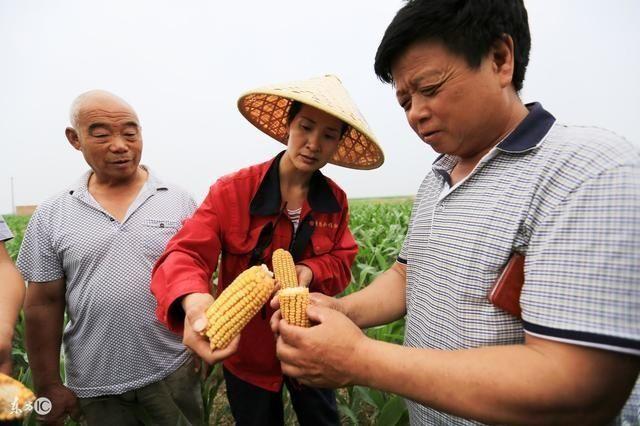 农民朋友创业不怕资金不够了,国家推出返农村