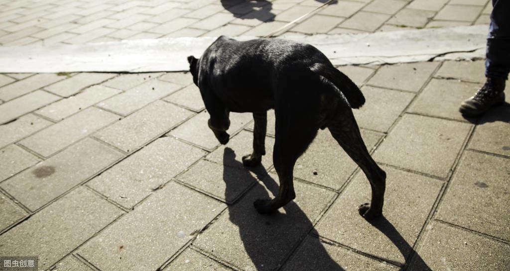 狗狗天生基因缺陷会瘫痪,究竟有什么症状?主人千万不要忽略