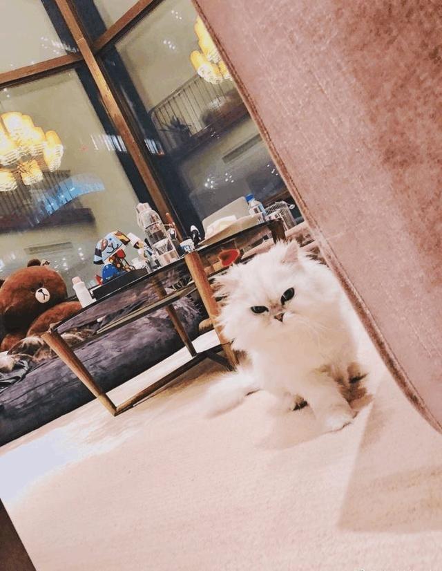 米咪搬进了王思聪豪宅, 信息量好大, 网友: 这是要转正吗