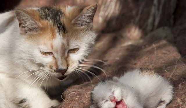 "<b>""救救我吧!""38℃高温下,一只流浪猫的自述……</b>"